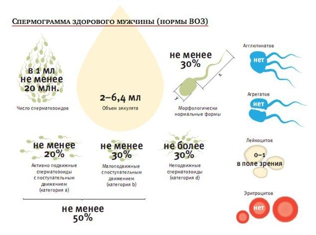 Как увеличить активность спермы