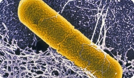 Бактерия, вызывающая ботулизм