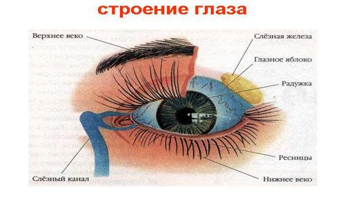 stroyeniye-glaza