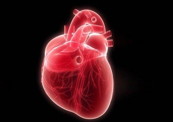 Сердце человека рисунок с подписями