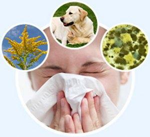 allergiya1